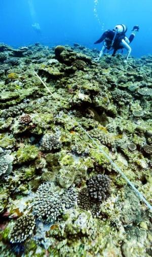 名護市辺野古の沖合水深5メートルで行われたサンゴなどの生息状況を調べるリ... 名護市辺野古の沖