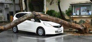 根本から倒れた木が信号待ちの車に直撃=24日午前10時前、那覇市泉崎(渡辺奈々撮影)