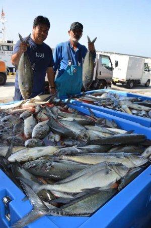 3キロサイズの大きなガーラが水揚げされた都屋漁港=9日午前10時すぎ、読谷村都屋漁港