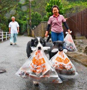 ごみ袋をくわえ、ごみ捨て場まで運ぶブッチー(手前左)とチャロ(同右)。左後方は区長の宮里博さん、右は妻のヨシ子さん=23日、国頭村宇良(西江千尋撮影)