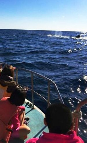 目の前のクジラに見入る子どもたち=2月28日、伊江島近海