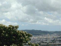 イジュの花と沖縄の空=16日午前