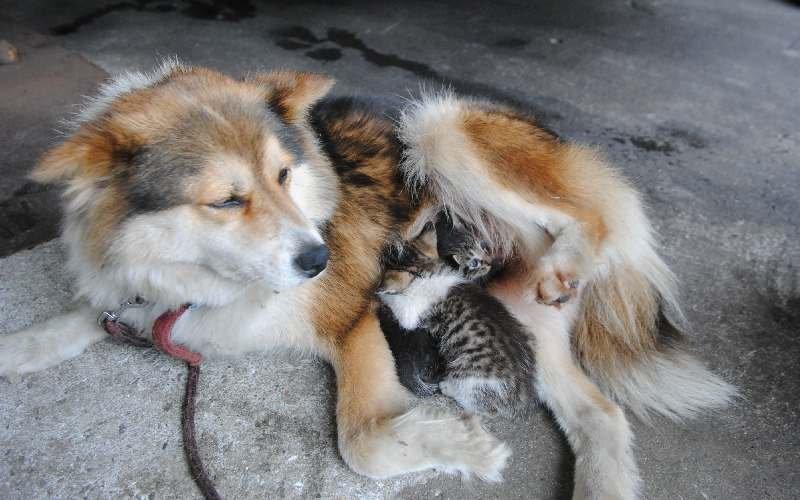 犬が子猫に授乳育児!?浦添・動画あり