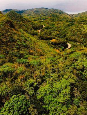 鮮やかな新緑が芽吹いた山々=3日午後、大宜味村大宜味(小型無人機で金城健太撮影)