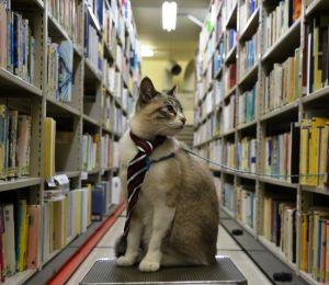 地下書庫に並ぶ本を見つめる「一日館長」のにゃんにゃん丸さん=22日、那覇市寄宮、県立図書館