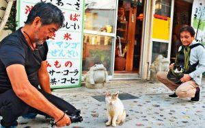 路地で出会った野良猫と、仲村清司さん(右)が抱える飼い猫「向田さん」を撮影する仲程長治監督(左)=那覇市壷屋