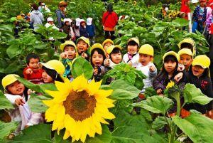 被災地の復興を願い植えられたヒマワリ。迷路で大きな花を見つけ歓声を上げる園児たち=10日午前、糸満市摩文仁・県平和祈念公園