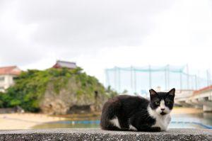 琉球猫サムレー
