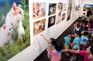 動物写真家の岩合光昭さんが撮影したネコの写真を鑑賞する大平保育所の園児たち=14日午前、浦添市美術館