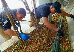 ボランティア活動で雑草取りに汗を流す米兵=16日、名護市二見