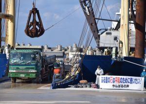 石材を台船に積み込むダンプカー=15日午前9時54分、本部港塩川地区