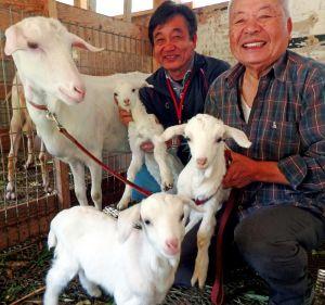 「三つ子のヤギ」を持ち上げ満面の笑みを浮かべる岸本さん(手前)と山本さん。わが子を見つめるジョセフィーヌ=名護市宇茂佐