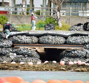 仮設道路下のウミガメ専用トンネル。奥には産卵場所がある=31日、米軍キャンプ・シュワブ沿岸