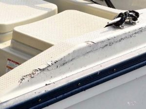 海保のゴムボートとの衝突でできた抗議船の破損部分=8日午前、名護市辺野古